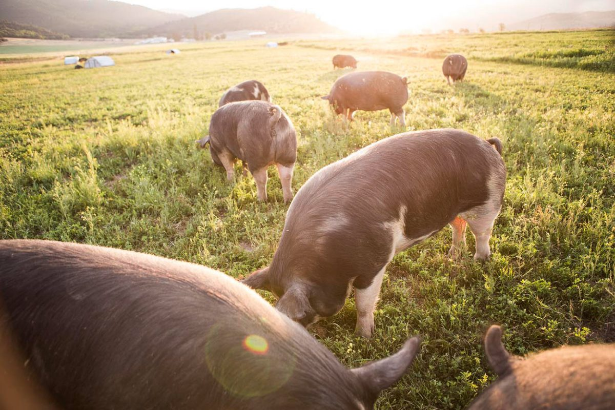 BelCampo Farms in Mount Shasta, California.