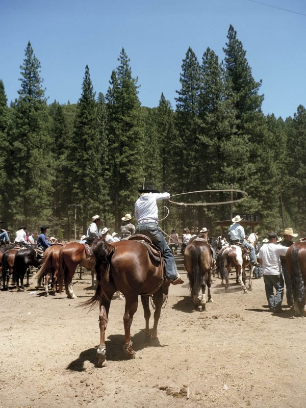 A roping contestant at the 2008 Silver Buckle Rodeo in Taylorsville, California.