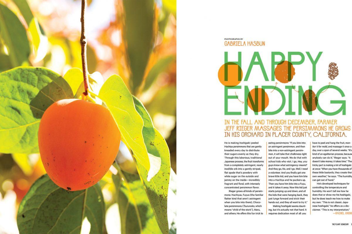 Hoshigaki story for Lucky Peach.