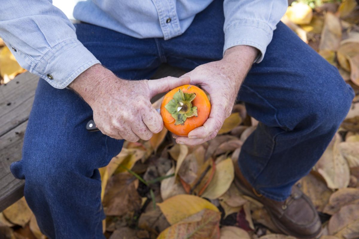 Jeff Rieger of Penryn Orchard Specialties photographed at his 4 acre farm in Loomis, California on November 24, 2014.